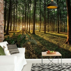 Forest Landscape Photo Wallpaper Wall Mural