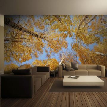 Fototapet - Autumnal treetops