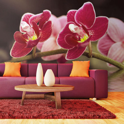 Fototapet - Beautiful orchid flowers on the water