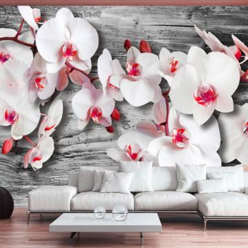 Fototapet - Callous orchids