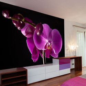 Fototapet - elegant  orchis