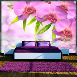 Fototapet - Orchids in lilac colour