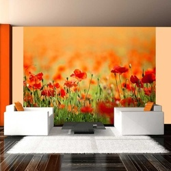 Fototapet - Poppies in shiny summer day