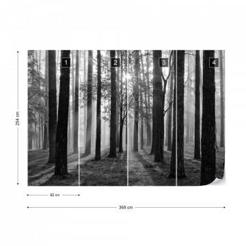 Fototapet - Răsărit de Soare în Pădure – Alb-Negru