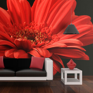 Fototapet - Red gerbera flower