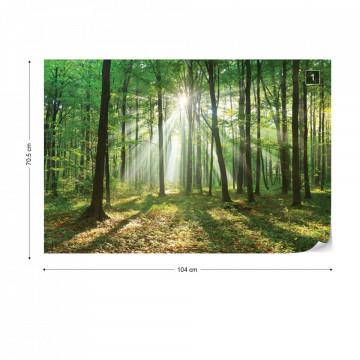 Green Forest Photo Wallpaper Wall Mural