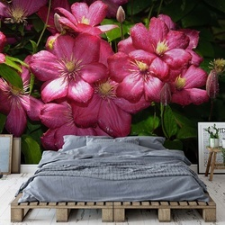 Pink Flowers Photo Wallpaper Wall Mural