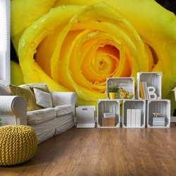 Rose Flower Yellow Photo Wallpaper Wall Mural