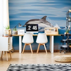 Striped Dolphin Photo Wallpaper Mural
