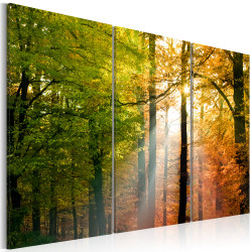 Tablou - A calm autumn forest