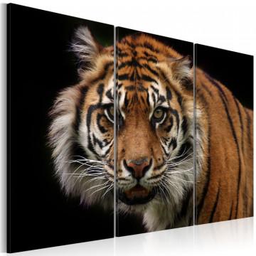Tablou - A wild tiger