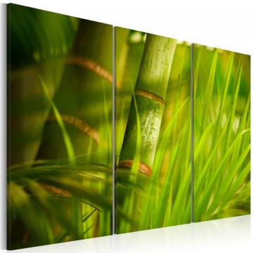 Tablou - Fresh green tropical grass