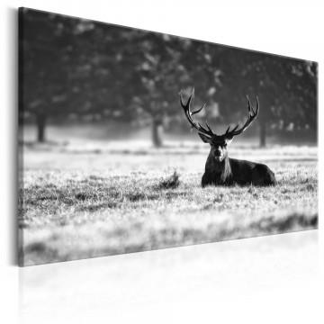 Tablou - Lying Deer