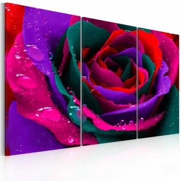 Tablou - Rainbow-hued rose