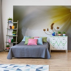 Amaryllis Photo Wallpaper Mural
