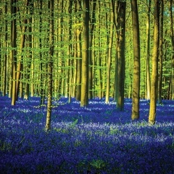 Blue Forest Trees Photo Wallpaper Wall Mural