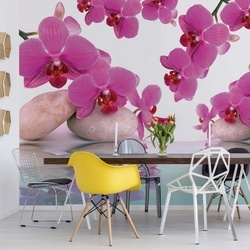 Flowers Orchids Photo Wallpaper Wall Mural