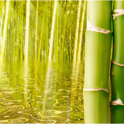 Fototapet - Exotic ambiance with bamboo