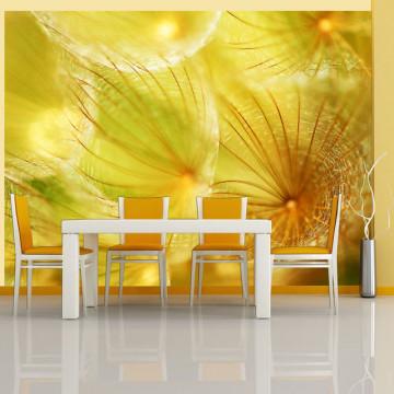 Fototapet - Soft dandelion flower