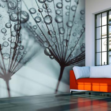 Fototapet - Turquoise dandelion