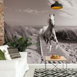 Horse Galloping On Beach Black And White Photo Wallpaper Wall Mural