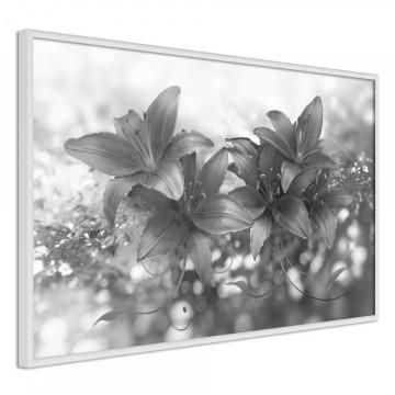 Poster - Dark Lillies