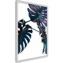 Poster - Evergreen Monstera