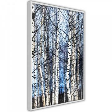 Poster - Winter Birch Trees