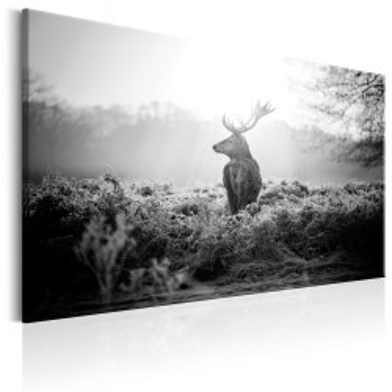 Tablou - Black and White Deer