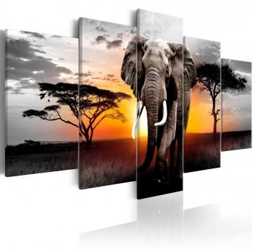 Tablou - Elephant at Sunset