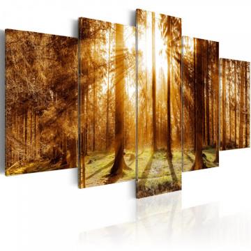 Tablou - Forest Illumination