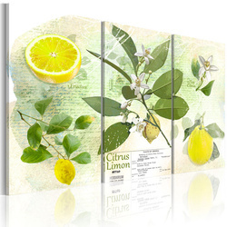 Tablou - Fruit: lemon