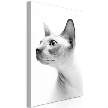 Tablou - Hairless Cat (1 Part) Vertical