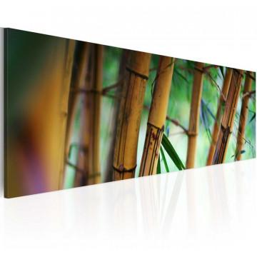 Tablou - Wild bamboos