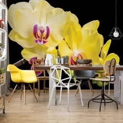 Yellow Orchids Flowers Photo Wallpaper Wall Mural