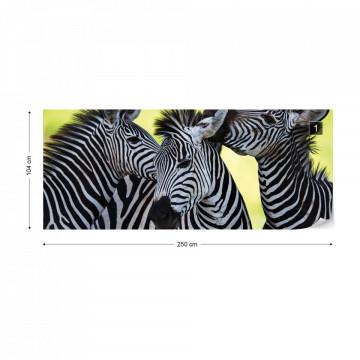 Zebras Photo Wallpaper Wall Mural