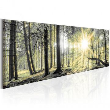 Tablou - Morning Forest