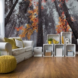 Autumn Colors Photo Wallpaper Mural