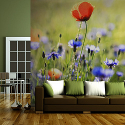 Fototapet - A meadow with a poppy among bluets