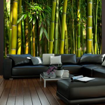 Fototapet - Asian bamboo forest