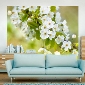 Fototapet - Beautiful delicate cherry blossoms
