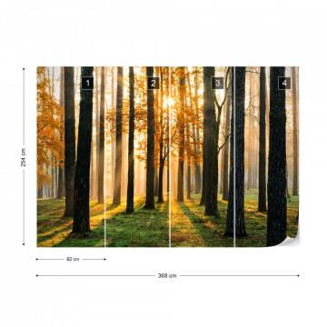 Fototapet - Răsărit de Soare în Pădure