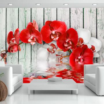 Fototapet - Ruby orchid