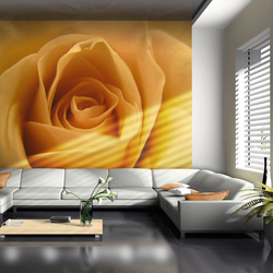 Fototapet - Yellow rose – a symbol of friendship