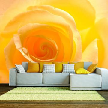 Fototapet - Yellow rose
