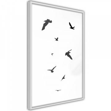 Poster - Birds
