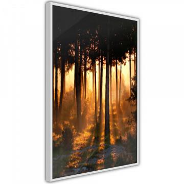Poster - Dark Tree Tops