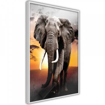 Poster - Majestic Elephant