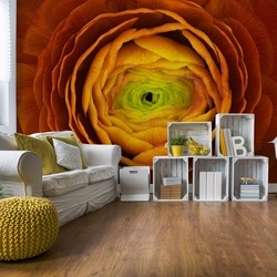 Ranunculus Asiaticus Photo Wallpaper Mural