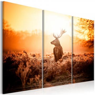 Tablou - Deer in the Sun I